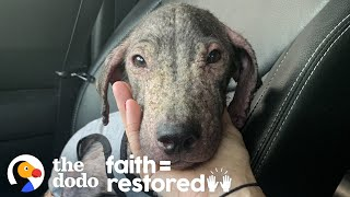 Puppy Found On The Beach Goes From Hairless To So Beautiful   The Dodo Faith = Restored by The Dodo
