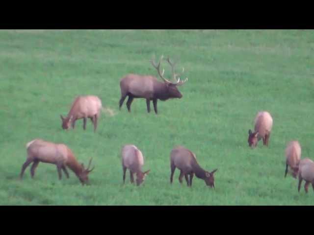 2013 Elk Video - 6