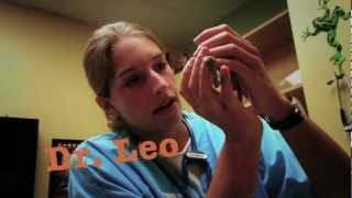 Exotic Pet Vet - Teaser