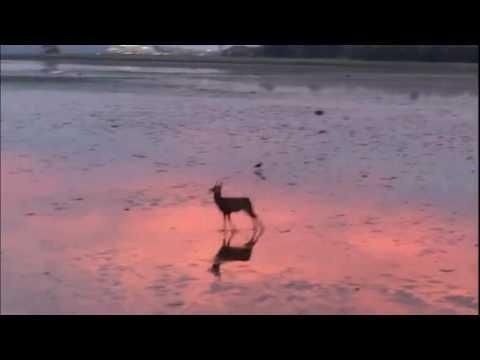 Happy Deer Majestically Skips Across Beach