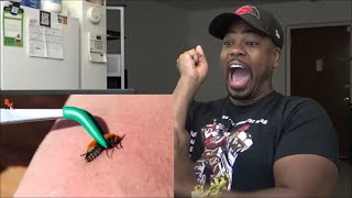STUNG by a COW KILLER REACTION!!!