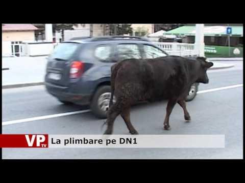La plimbare pe DN1