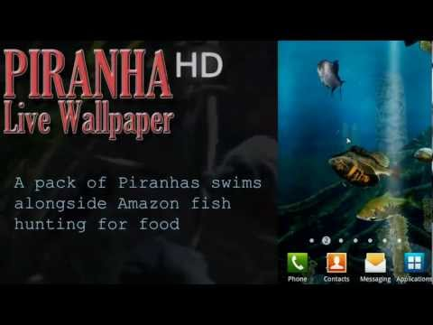 Video of Piranha Live Wallpaper HD
