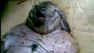 Babi Ngepet Ditemukan di Bekasi, Bentuknya Seperti Manusia Gendut
