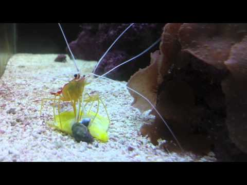 Death of a Yellow Tang