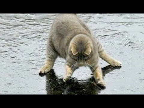 You will LAUGH SO HARD that YOU WILL FAINT - FUNNY CAT compilation