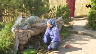 Инспекция сада после зимы.САД день за днем