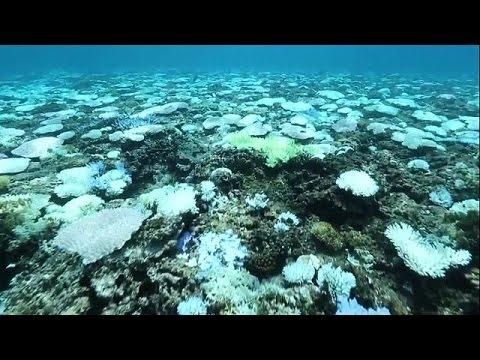 Ιαπωνία: Επιδημία λεύκανσης απειλεί τα κοράλλια