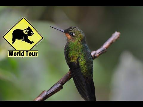 Voyage au Costa Rica, Monteverde et Santa Elena (Travel Costa Rica) Tour du monde (around the world)