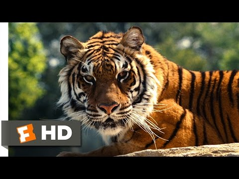 We Bought a Zoo (2/3) Movie CLIP - Yelling Down the Tiger (2011) HD
