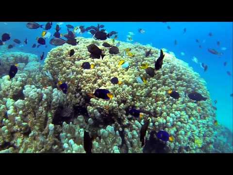 House Reef Marsa Shagra