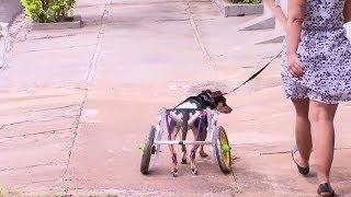 Cão mascote do CCZ de Bauru é adotado depois de três anos a espera de um novo lar