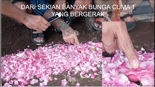 Video KEJADIAN ANEH DI MAKAM DRUMER SEVENTEEN MP3, 3GP, MP4, WEBM, AVI, FLV Januari 2019