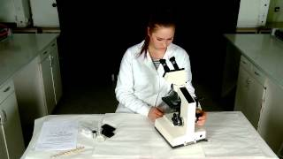 Pomiar wielkości komórek drożdży pod mikroskopem
