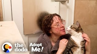 Sick Cat Makes His Foster Mom Go To Extremes! | The Dodo Adopt Me! by The Dodo