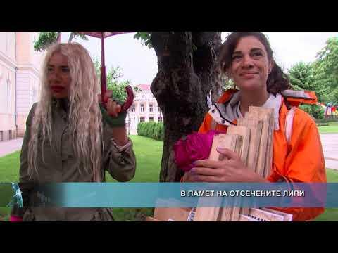 Разширен репортаж: В памет на отсечените липи