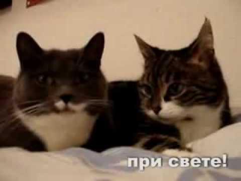Чрезмерная любовь к кошкам = (( / видео
