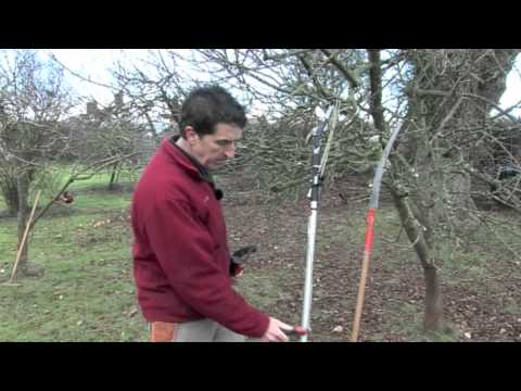 A practical beginners guide to fruit tree pruning
