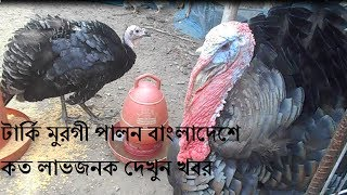 Turkey Farm in Bangladesh, Turkey farming's potential business in our country. Through turkey production, many Bangladeshi...