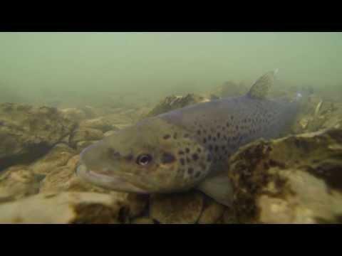 Milujem rybolov - Sezóna 2013