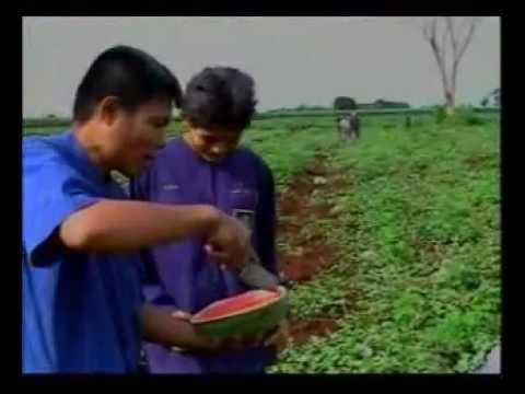 การปลูกแตงโมไร้สารพิษ 1_2
