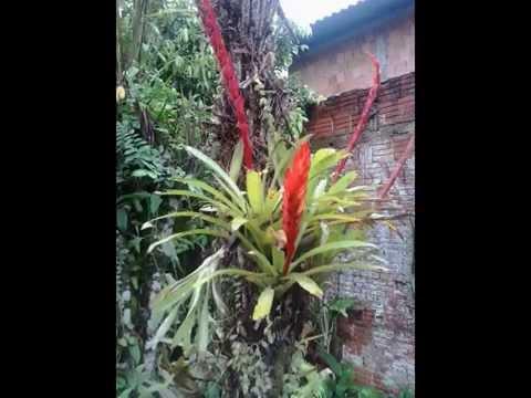 plantas e flores em nossa chacara em Araquari/sc/Brasil