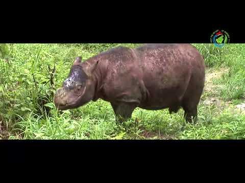 Visit The Heart of Borneo