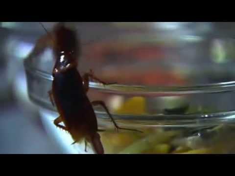 3D Pestcontrol 2014 - Cucarachas periplanetas en una cocina.