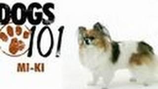Dogs 101 - Mi-Ki