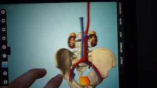 Anatomy 3D - Anatronica YouTube video