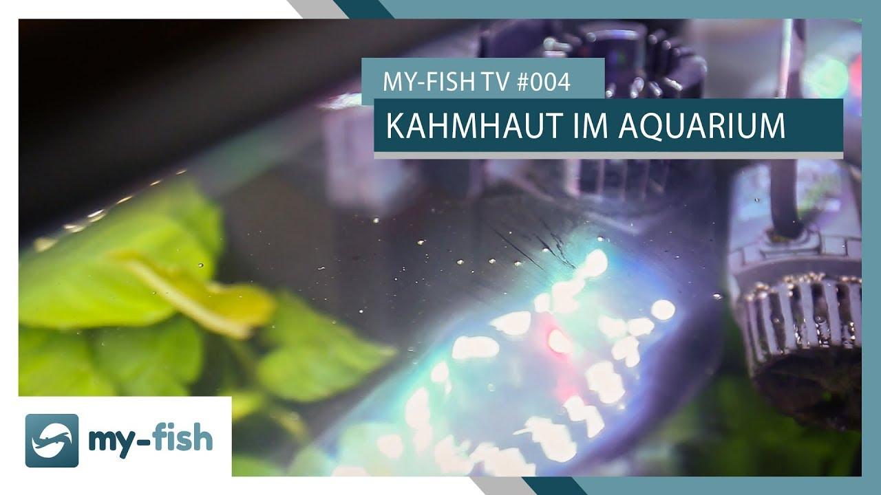 my-fish TV - Deine Nr. 1 Anlaufstelle für alle Themen rund um die Aquaristik 60