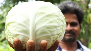 Tasty Cabbage Curry with Simple Recipe