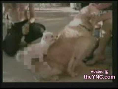 Dog Viagra Called Bonerol. Funny clip.