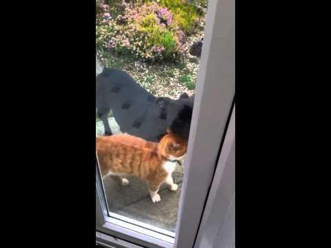 Ginger cat & caddie