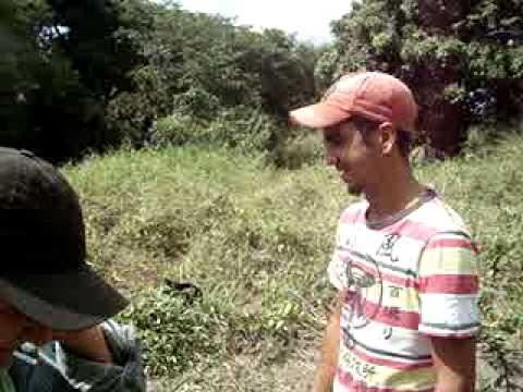 Enxertia para mudas de citrus em Rio Verde - Iraquara - Bahia