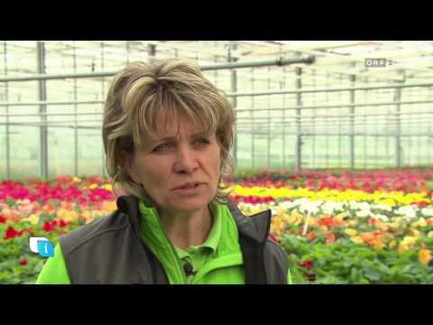 Blattschmuckpflanzen für Beet und Balkon