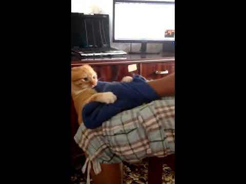 Lepiej go nie wkurzać! Czyli nie ma to jak spi*rdalać przed własnym kotem na balkon :D