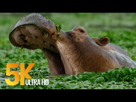5K African Wildlife Video - Mana Pools National Park - 2017 by Robert Hofmeyr