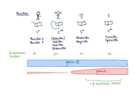 Brandl's Basics: Beta-lactam antibiotics - The Penicillins