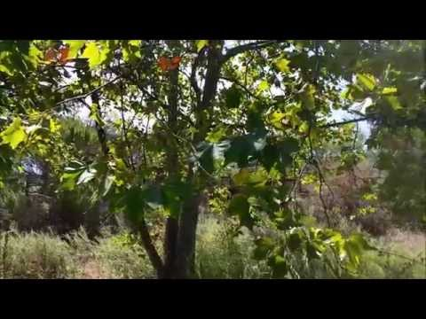 San Diego Edible & Medicinal Plant Hike
