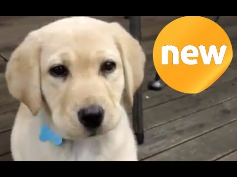 PUPPY ► TOP 10 YOUTUBE PUPPIES #1 ◄ Dont miss!