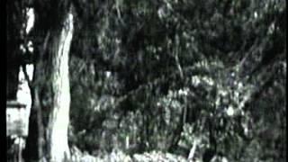 Video Through the Dark Forest