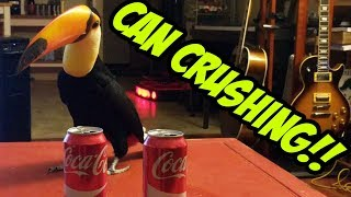 Toucan vs. 2 Cans (CAN CRUSHING!)