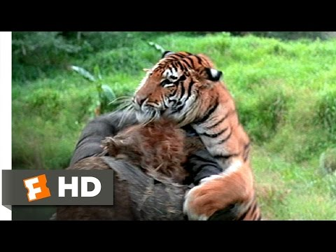 The Island Of Dr. Moreau (5/12) Movie CLIP - Tiger Vs. Tigerman (1977) HD