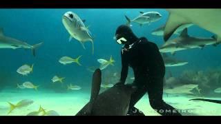 Кристина Зенато — заклинательница акул