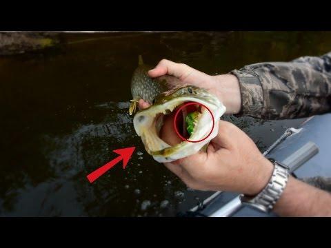 как поймать щуку с берега видео
