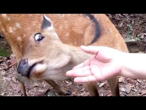 I PROMISE that YOU will get A LAUGH ATTACK - FUNNY ANIMAL compilation