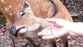 Video I PROMISE that YOU will get A LAUGH ATTACK - FUNNY ANIMAL compilation MP3, 3GP, MP4, WEBM, AVI, FLV Juni 2018