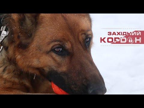 Як навчити собаку команди «АПОРТ»? Поради прикордонника-кінолога.
