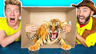 Video What's in the BOX Challenge!! **LIVE ANIMALS** Gross Giant Slime Orbeez & Real Food vs. Gummy Food MP3, 3GP, MP4, WEBM, AVI, FLV Desember 2017